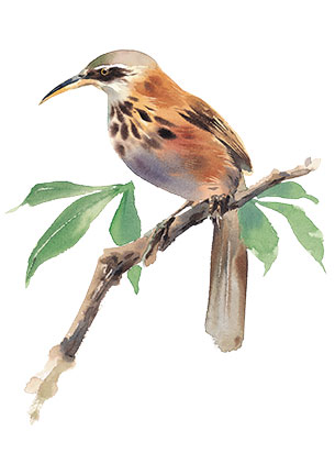 juno-Fioritura-Bird-2