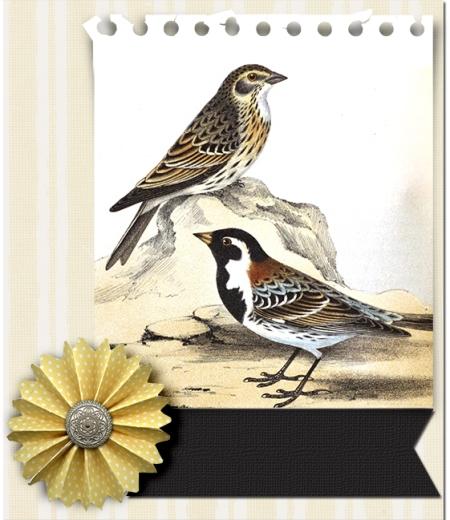 juno Melissavena Sparrow Cluster