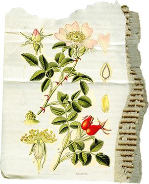 juno Apricot Nectar Floral Cardboard web