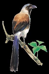 scrapdot Bird web